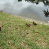 Admirez tous les jours le va-et-vient des canards, des tortues et autres oiseaux exotiques de Floride